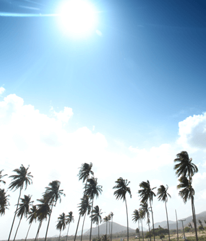 Environment Sky